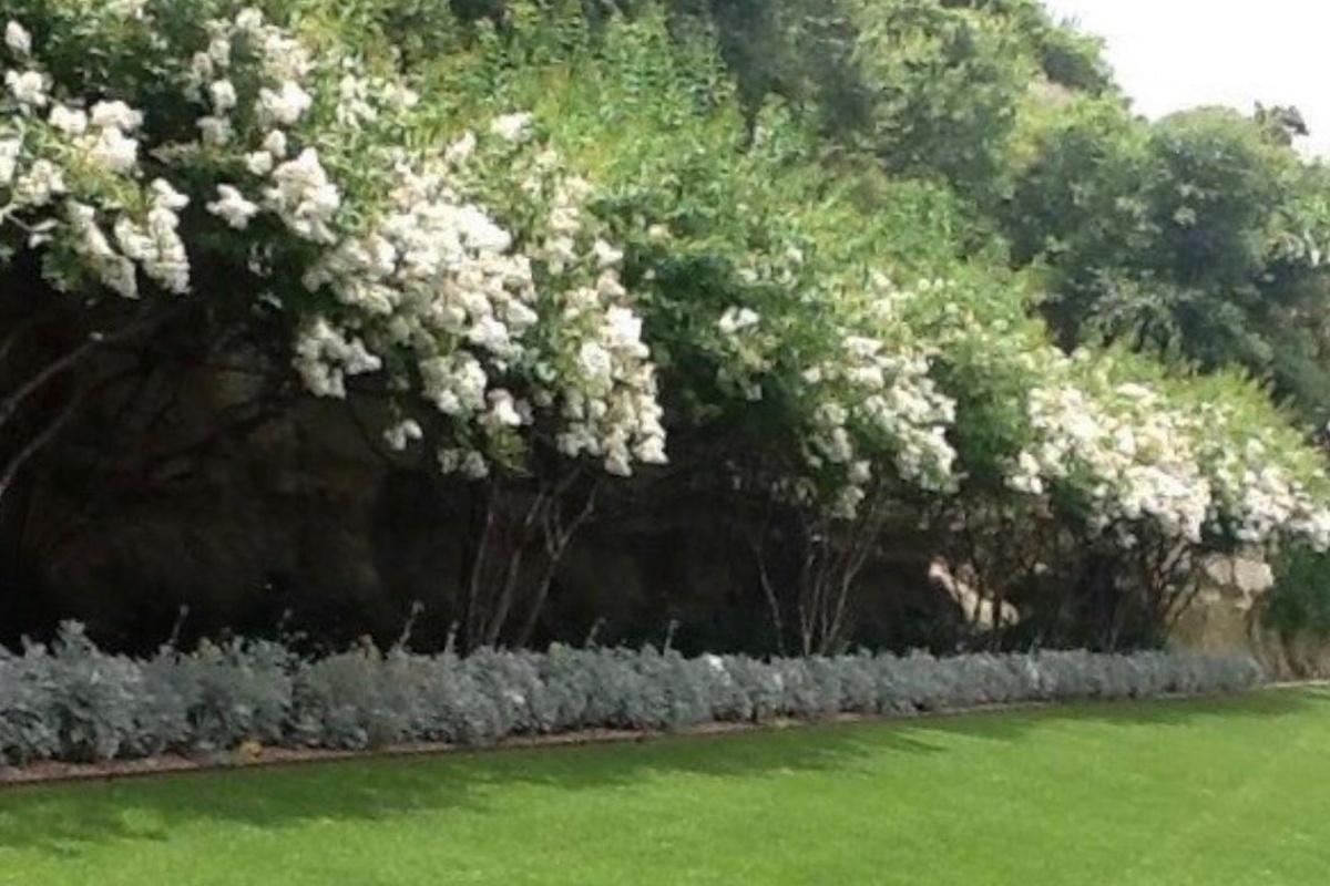Plantsmanship & Horticulture II.