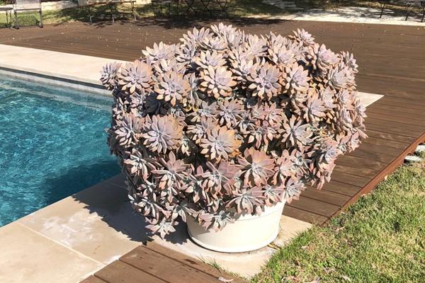 Topiary VI.